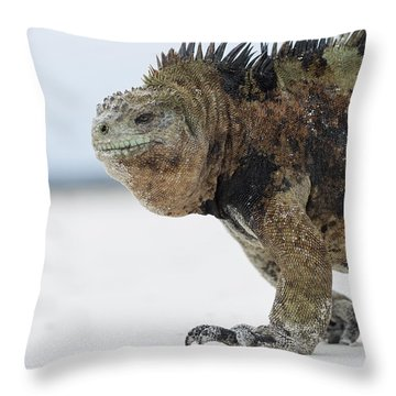 Throw Pillow featuring the photograph Marine Iguana Male Turtle Bay Santa by Tui De Roy