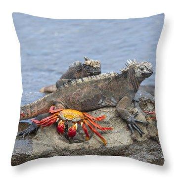 Marine Iguana Pair And Sally Lightfoot Throw Pillow