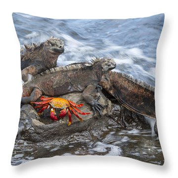 Marine Iguana Trio And Sally Lightfoot Throw Pillow