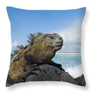 Marine Iguana Turtle Bay Santa Cruz Throw Pillow