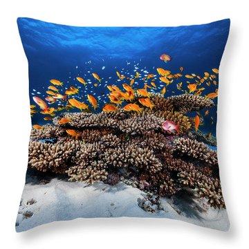 Coral Reef Throw Pillows