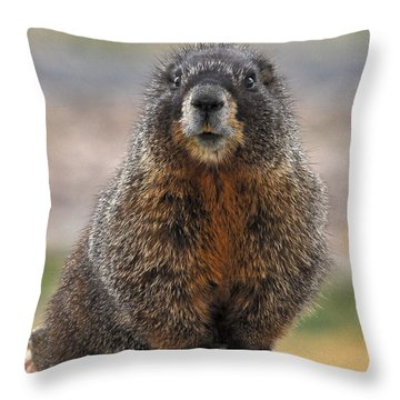 Throw Pillow featuring the photograph Marmot by Mae Wertz