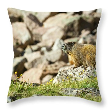 Marmot In Rocky Mountain National Park Throw Pillow