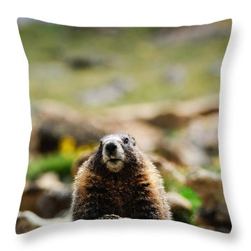 Marmot On A Rock Throw Pillow by Bonnie Fink