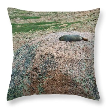 Marmot Resting On A Rock Throw Pillow