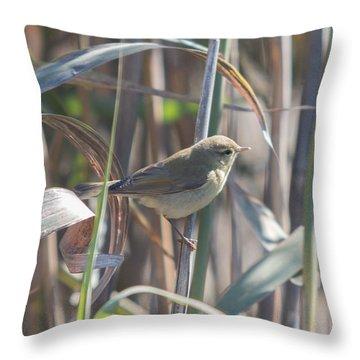 Throw Pillow featuring the photograph Marsh Warbler - Acrocephalus Palustris by Jivko Nakev