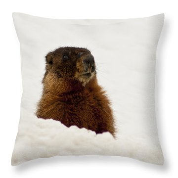 Throw Pillow featuring the photograph Marty The Marmot by Daniel Hebard