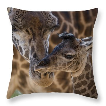 Masai Giraffe And Calf Throw Pillow