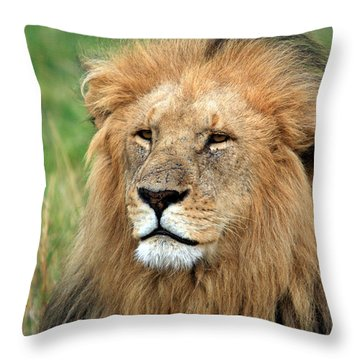 Masai Mara Lion Portrait    Throw Pillow