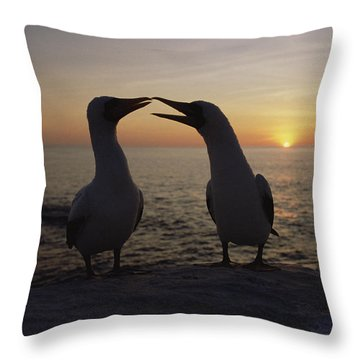 Masked Booby Couple Courting Galapagos Throw Pillow by Konrad Wothe