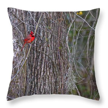 Master Of His Domain Throw Pillow by Dan Wells