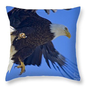 Throw Pillow featuring the photograph Master Of The Sky by Nick  Boren