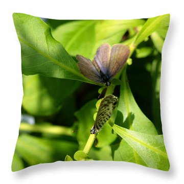 Throw Pillow featuring the photograph Mating Dance by Greg Allore