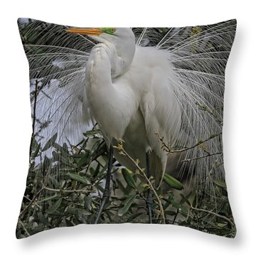 Mating Plumage Throw Pillow by Deborah Benoit
