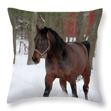 Maxwell's Gold Throw Pillow