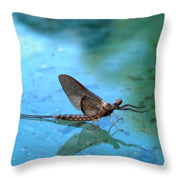 Mayfly Reflected Throw Pillow