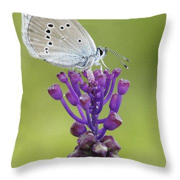 Mazarine Blue Butterfly Dordogne France Throw Pillow