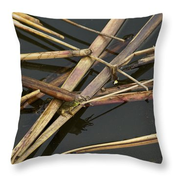 Throw Pillow featuring the photograph Me And My Shadow - A Frog In The Pond by Jane Eleanor Nicholas