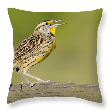 Meadowlark Calling From A Fence Throw Pillow