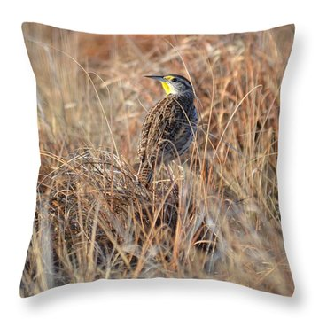 Meadowlark In Grass Throw Pillow