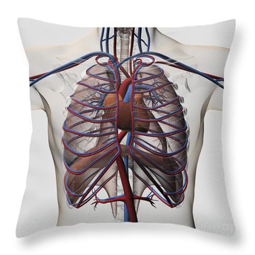 Medical Illustration Of Male Chest Throw Pillow