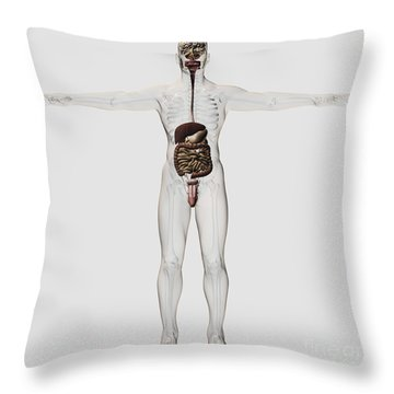Medical Illustration Of Male Digestive Throw Pillow
