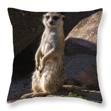 Meerkat Looking Forward Throw Pillow by Chris Flees