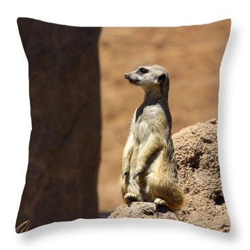Meerkat Lookout Squared Throw Pillow by Chris Thomas