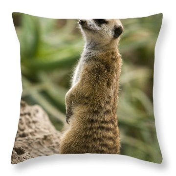 Meerkat Mongoose Portrait Throw Pillow by David Millenheft
