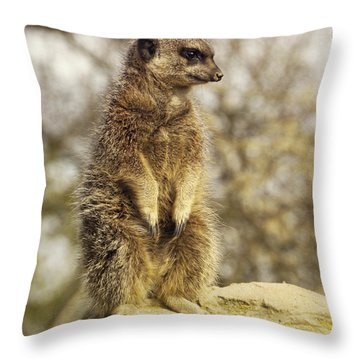 Meerkat On Hill Throw Pillow