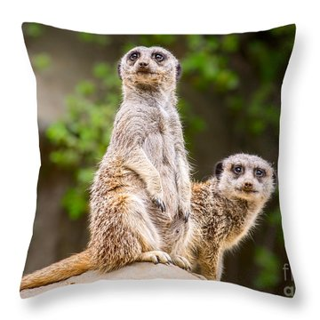 Meerkat Pair Throw Pillow