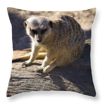 Meerkat Resting On A Rock Throw Pillow by Chris Flees