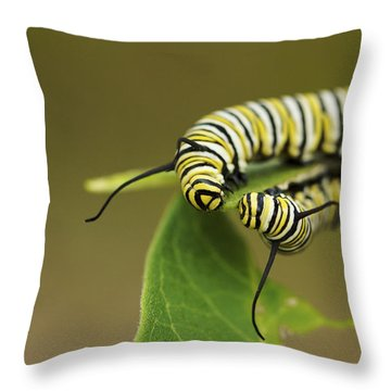 Throw Pillow featuring the photograph Meeting In The Middle - Monarch Caterpillars by Jane Eleanor Nicholas