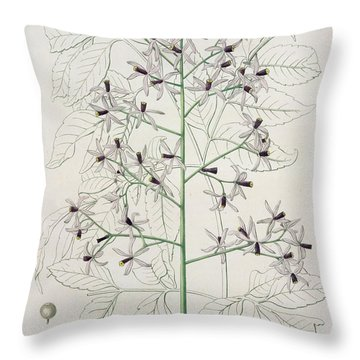Melia Azedarach From 'phytographie Medicale' By Joseph Roques Throw Pillow by L F J Hoquart