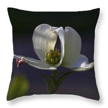 Memory - A Dogwood Blossom Throw Pillow