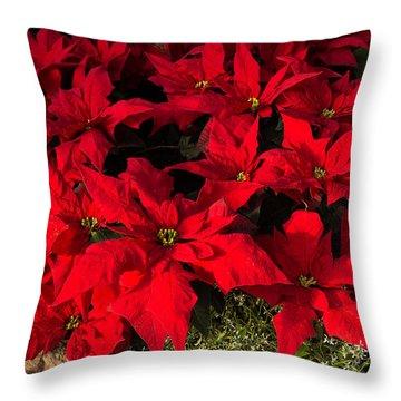 Merry Scarlet Poinsettias Christmas Star Throw Pillow