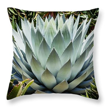Mescal Throw Pillow by Kelley King