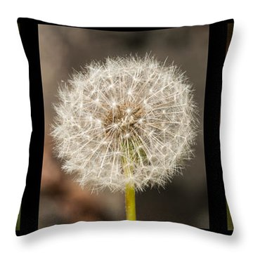 Metamorphosis Throw Pillow by Lara Ellis