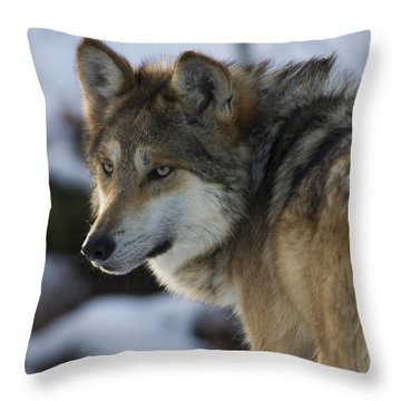 Mexican Gray Wolf Throw Pillow