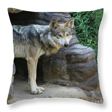 Mexican Wolf #2 Throw Pillow