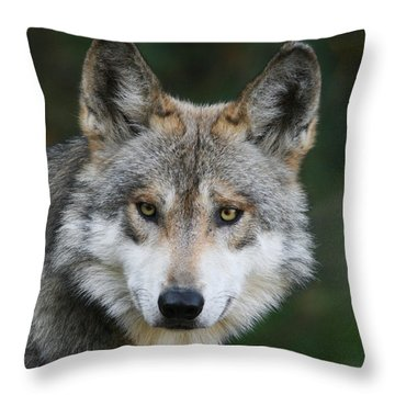 Mexican Wolf #3 Throw Pillow