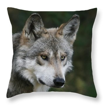 Mexican Wolf #4 Throw Pillow