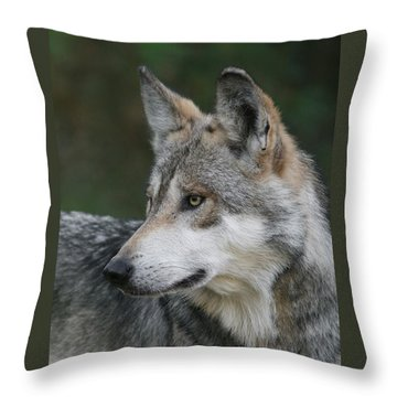 Mexican Wolf #6 Throw Pillow by Judy Whitton