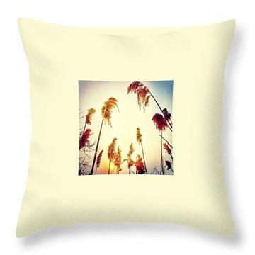 Sunny Throw Pillows