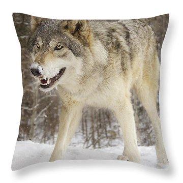 Micah  Throw Pillow by Brian Cross