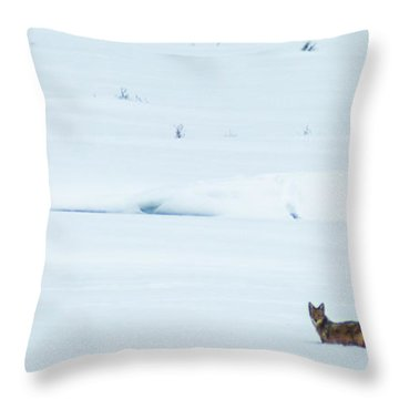 Michigan Coyotee  Throw Pillow by Optical Playground By MP Ray