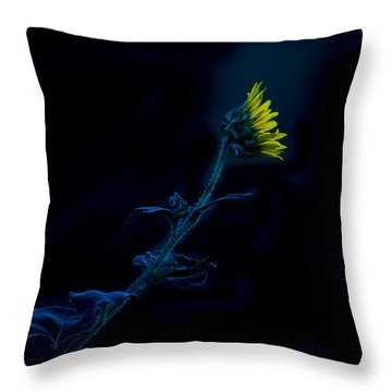 Throw Pillow featuring the photograph Midnight Sunflower by Darryl Dalton