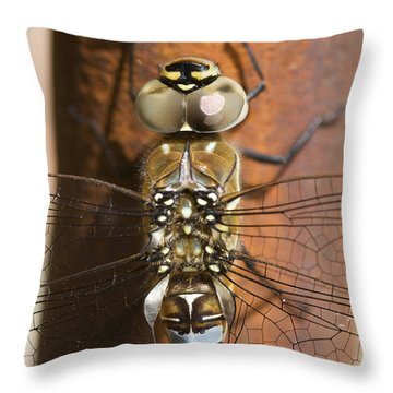 Migrant Hawker Dragonfly Closeup Throw Pillow