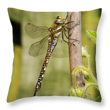 Migrant Hawker Dragonfly Throw Pillow