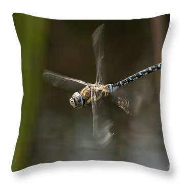 Migrant Hawker Dragonfly In Flight Throw Pillow